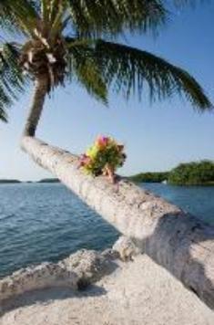 Bouquet_on_tree-135x217-235x356